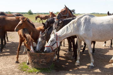 Horses drinking in pasture