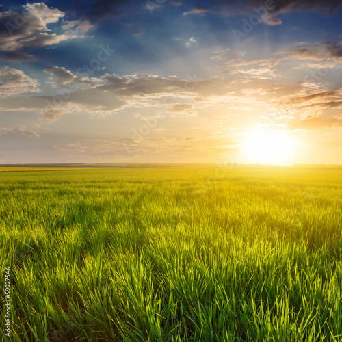 evening green fields