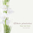 Beautiful white gladiolus flower