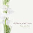 Beautiful white gladiolus flower