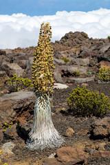 Hawaii - Maui - Haleakala