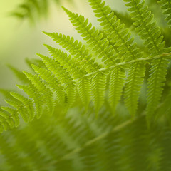 Blurry fern background