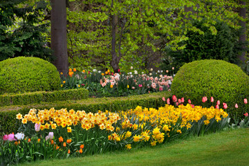 Tulips and narcissus in the park.