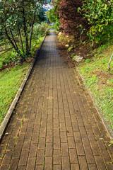 Caminando entre naturaleza