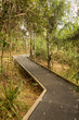 Raised walkway through forest in NSW