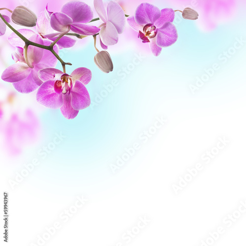 Papiers peints Orchidée Floral background of tropical orchids