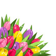 Colorful tulips with dew drops. Vector illustration.