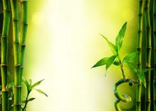 fond avec du bambou pour le traitement de spa - vert olive