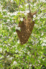 swarm of bees over the tree in countryside