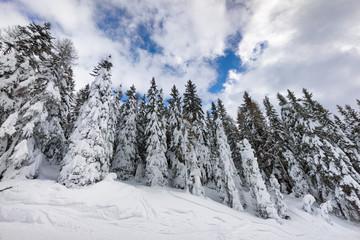 mountain frozen forest