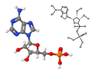 Vitamin B8 molecule with chemical formula