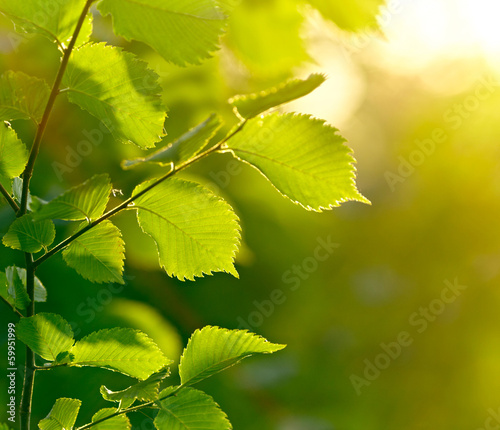 Green leaves background. Shallow DOF