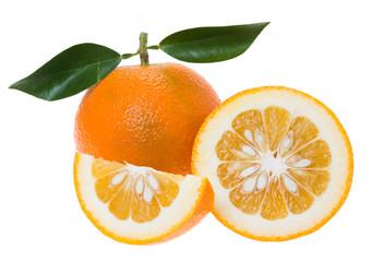 Bitter orange (Seville orange, bigarade orange)