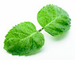 Green Mint Leaves on white background