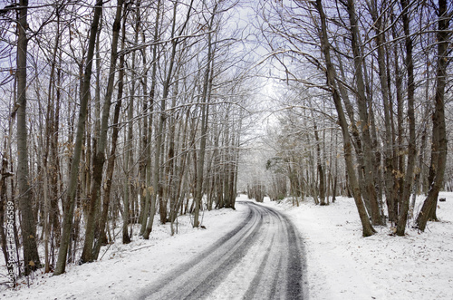 Snowy Road And Bare Trees In Etna Park, Sicily