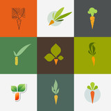 Carrot. Set of decorative design elements. Vector illustration