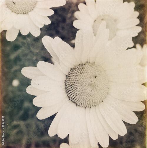 Wild daisies © Stillfx