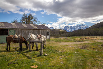 Horse and Stable - Torres del Paine Chile