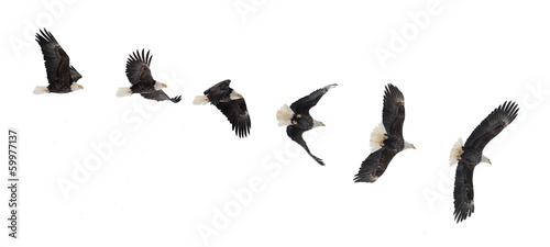 Foto op Canvas Eagle Flying bald eagle