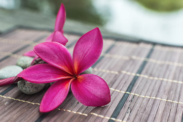 Pink plumeria on black bamboo blind