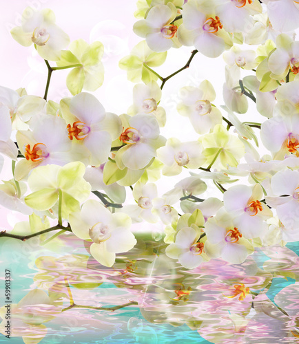 Beautiful water flowers Japanese Orchid.Beauty.Flora