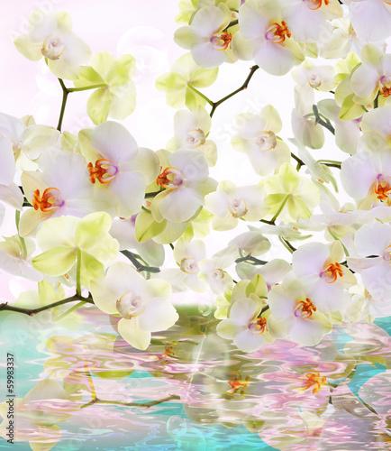 Fotobehang Orchidee Beautiful water flowers Japanese Orchid.Beauty.Flora