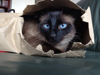 a escondidas