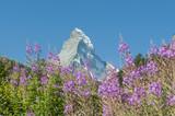Zermatt, Alpenwiesen, Schweizer Alpen, Matterhorn, Furi, Schweiz poster