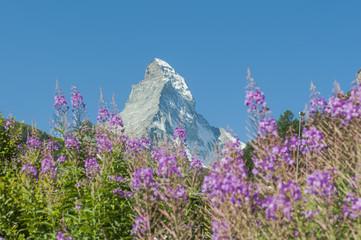 Zermatt, Alpenwiesen, Schweizer Alpen, Matterhorn, Furi, Schweiz