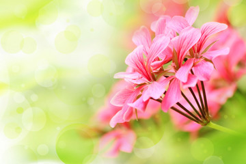Beautiful floral background with pink flower