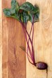 Red Beet on Wood