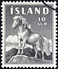 Icelandic Pony (Iceland 1958)