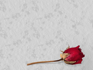 Faded rose - time passes, loving memory concept