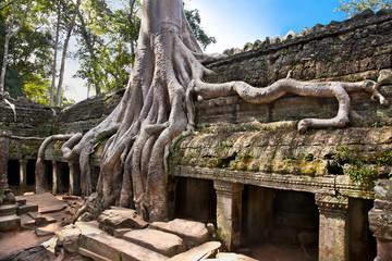 Prasat Ta Prum or Ta Prohm Temple complex, Cambodia.