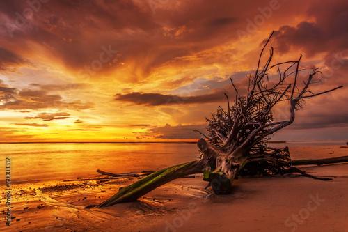 Fotobehang Overige Dead tree trunk on tropical beach