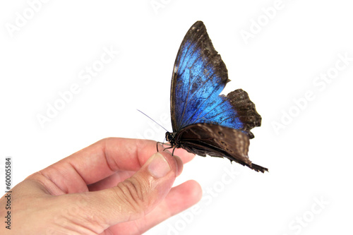 Blue Butterfly and hand