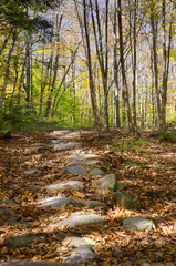 Catskills Path