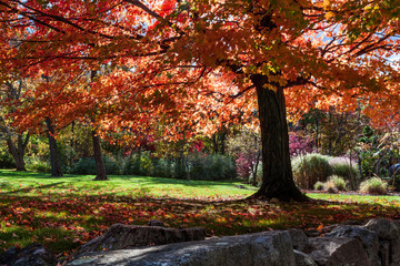 Tree with red fall foliage in the NJ Botanical Gardens