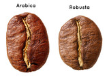 Black arabica, robusta coffee bean isolated on white background. - 60007970