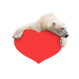 Polar bear with a paper heart in his paws