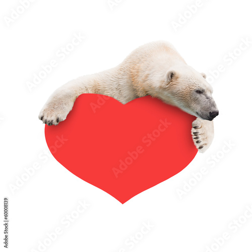 Fotobehang Ijsbeer Polar bear with a paper heart in his paws