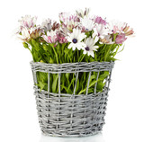 bouquet of beautiful summer flowers in wicker vase, isolated