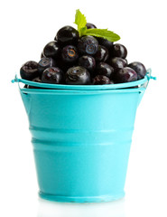 blueberris in bucket with mint isolated on white