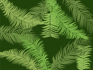 dark green fern background