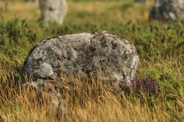 Alignements de Kermario(Menhirs, mégalithes, pierres levées),