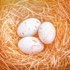 Three easter eggs in the nest for easter