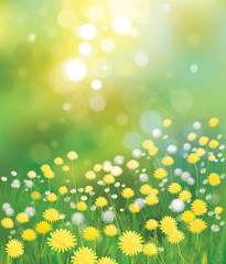 Vector dandelions background.