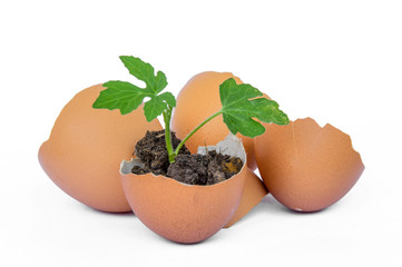 Egg Shells on White Background