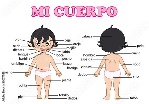 vocabulary part of body in Spanish