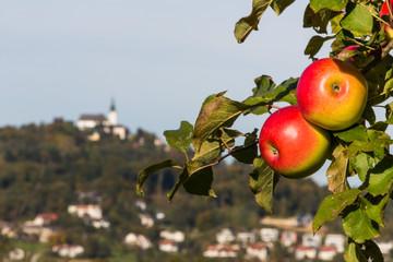 Apfelbaum mit Pöstloingberg